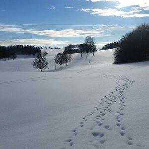 7_Winter_GCSO2016_17__6_.jpg
