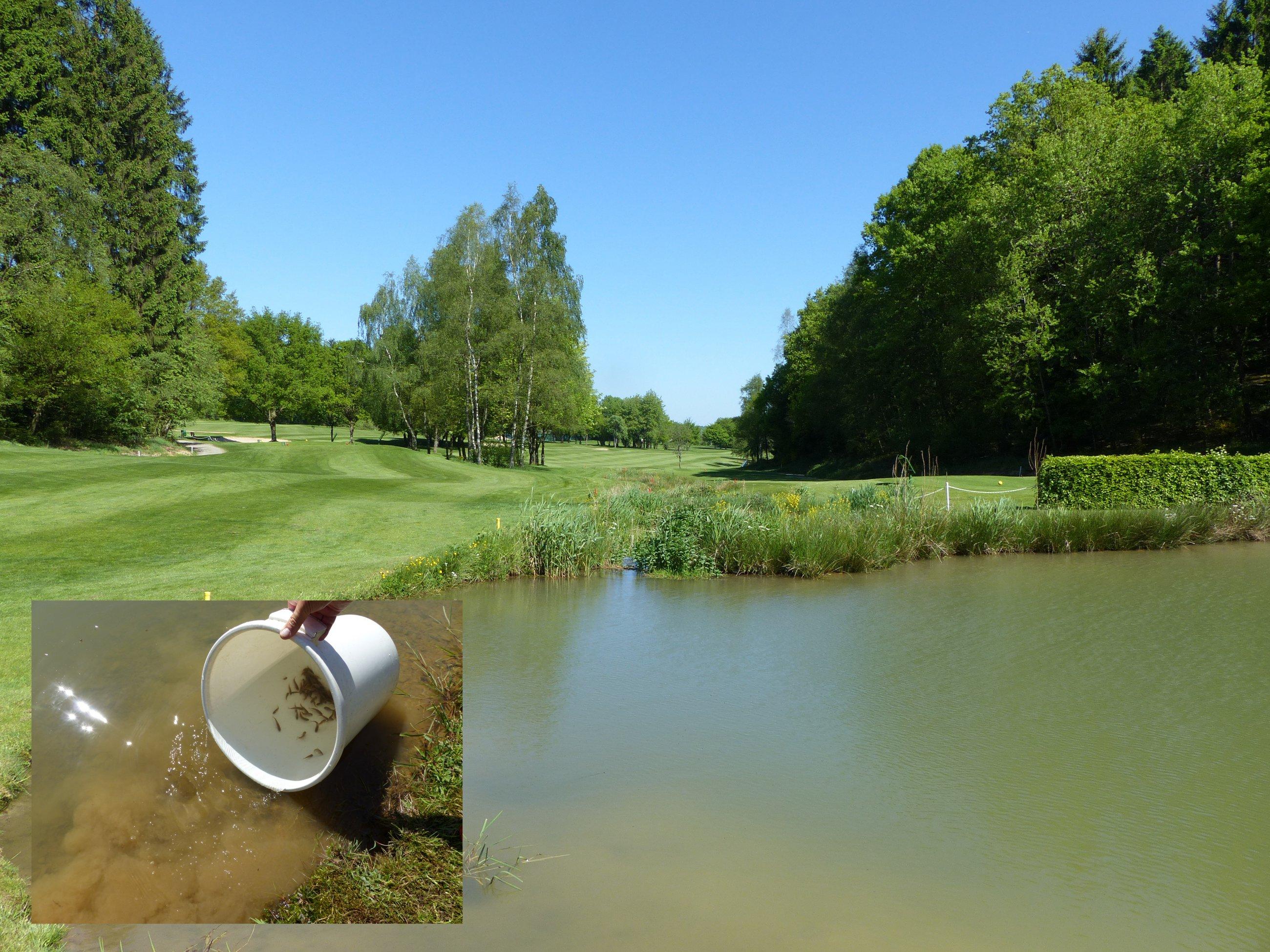 Golfclub siegen olpe artikel lesen for Jungfische im teich